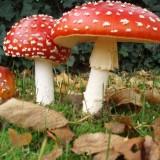 Rainha de Inglaterra tem… cogumelos alucinogénicos no jardins do palácio